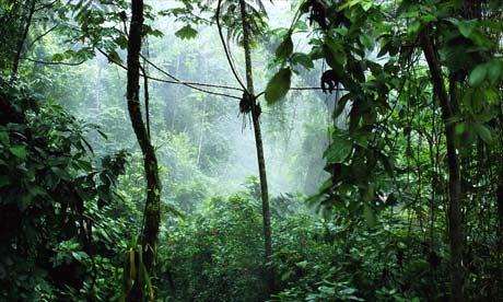 JunglePaulASoudersCOrb4